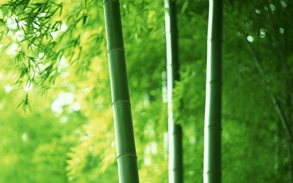 Tree-Feng-Shui