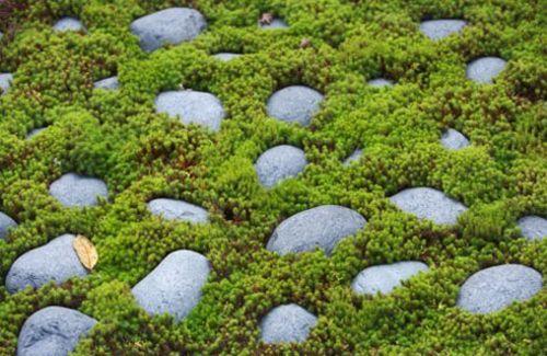 จัดสวนสวย สนามหญ้า ก้อนหินน้ำตก garden-idea-banidea
