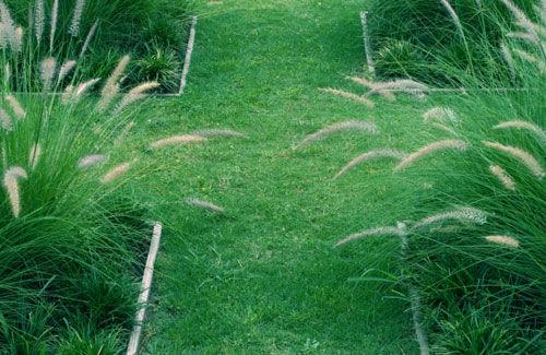 จัดสวน ตกแต่ง สนามหญ้า ทางเดิน