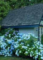 บ้านไม้ ล้อมรอบไปด้วย สวนดอกไม้ที่บานสะพรั่ง