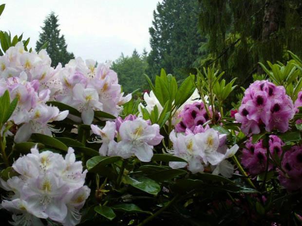 ดอกไม้สำหรับจัดสวนในบ้าน