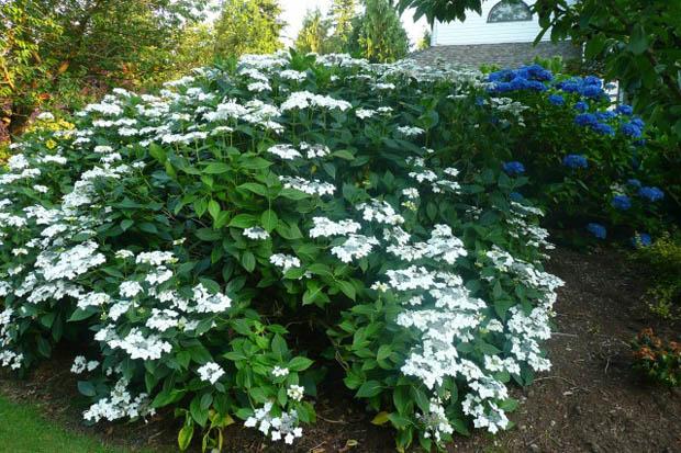 พันธุ์ดอกไม้ สำหรับจัดสวนสวยในบ้าน