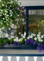 ไอเดีย จัดสวนดอกไม้ ริมหน้าต่าง