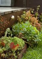วิธีสร้างบ้านให้เย็น ด้วยการจัดสวนหย่อมเล็กๆ หน้าบ้าน