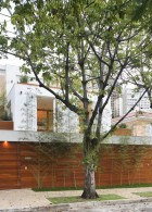 ปลูกต้นไผ่ ไว้ริมกำแพงบ้าน
