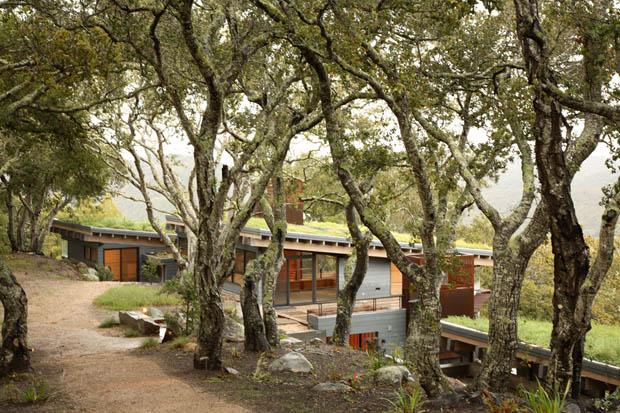 การสร้างบ้าน ในป่าธรรมชาติ