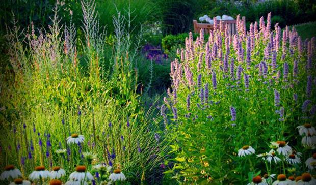 ต้นหญ้า พันธุ์ดอกหญ้า สำหรับจัดสวน