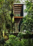 ปลูกป่าธรรมชาติ บริเวณบ้าน