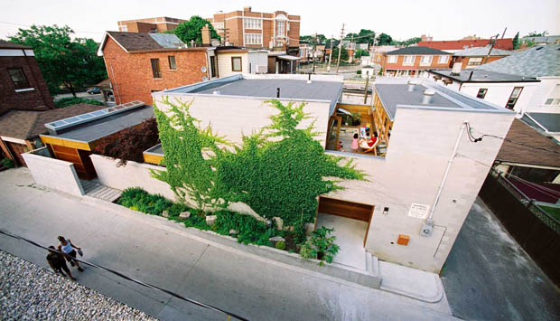 จัดสวนแนวตั้ง ต้นไม้ ไต่กำแพงบ้าน