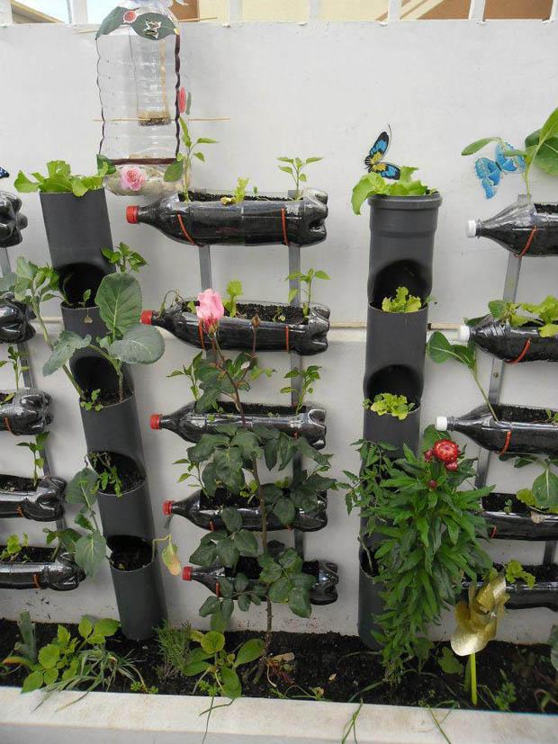 จัดสวนผัก ปลูกผักในขวาดพลาสติก