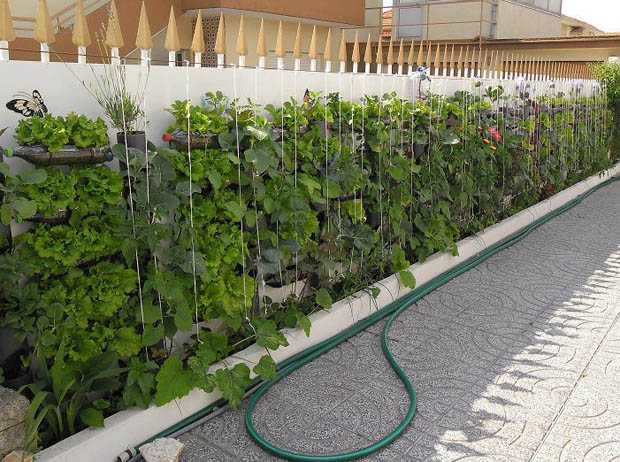 จัดสวนผักสวยๆ สวนผักริมรั้ว แนวตั้ง