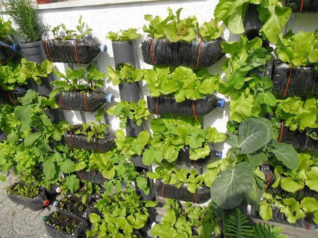 วิธีปลูกผักทานเอง สวนผักในบ้าน