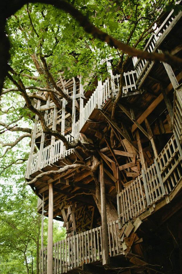 การสร้างบ้านต้นไม้