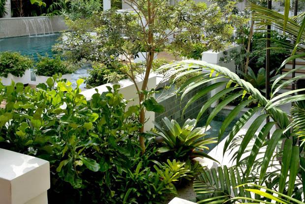 จัดสวนสวยๆ ด้วยพืชสวนครัว