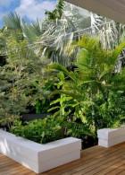ต้นไม้สำหรับจัดสวน ประเภท หมาก ปาล์ม