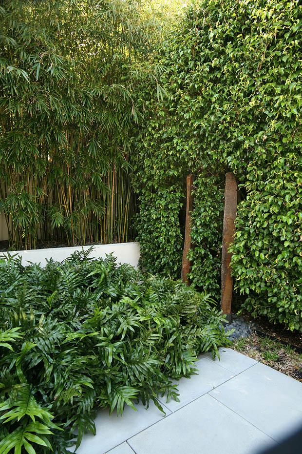 ต้นไทร ต้นไม้ไผ่ ประดับกำแพงบ้าน
