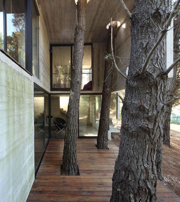 เจาะพื้น เพดานบ้าน เว้นพื้นที่ให้ต้นไม้