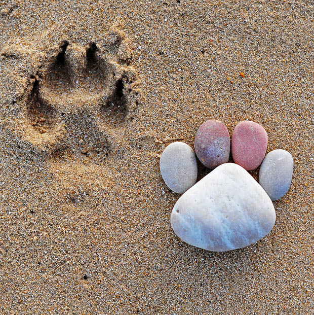 ไอเดียจัดแต่ง หินน้ำตกให้สวยงาม