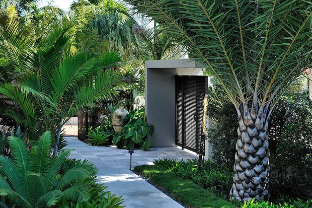 ต้นปาล์ม ค็อกเทล สำหรับจัดสวน