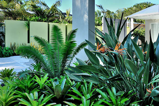 ต้นรวยไม่เลิก ไม้มงคลจัดสวนสวย
