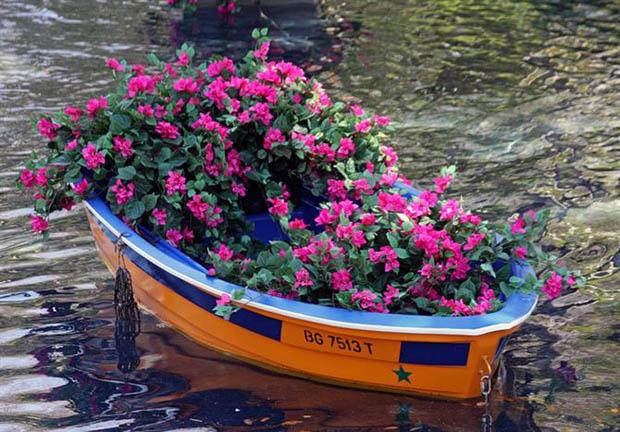 จัดสวนในเรือ