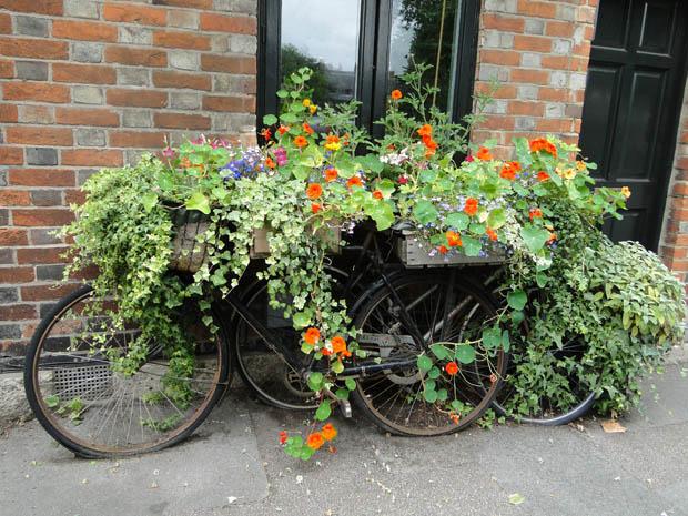 สวนดอกไม้หน้าบ้าน