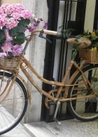 จัดสวนในจักรยานเก่า
