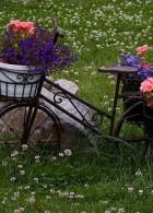 จักรยานเก่าๆกับการจัดสวน