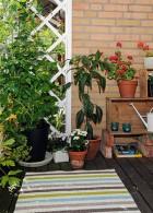 จัดสวนในระเบียงบ้าน