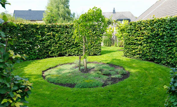 การจัดสวนหย่อมบริเวณบ้าน