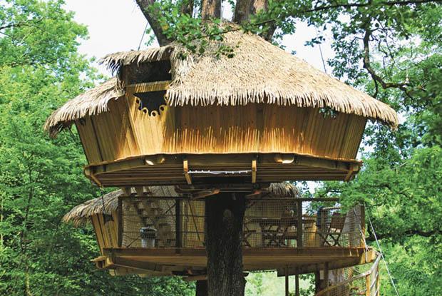แบบบ้านต้นไม้ สร้างบ้านบนต้นไม้ใหญ่
