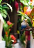นกแก้วจัดสวน ต้นไม้ปลอด ต้นไม้พลาสติก