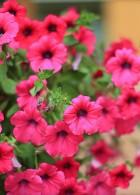 ดอกไม้สวยๆ ตกแต่งสวนข้างบ้าน