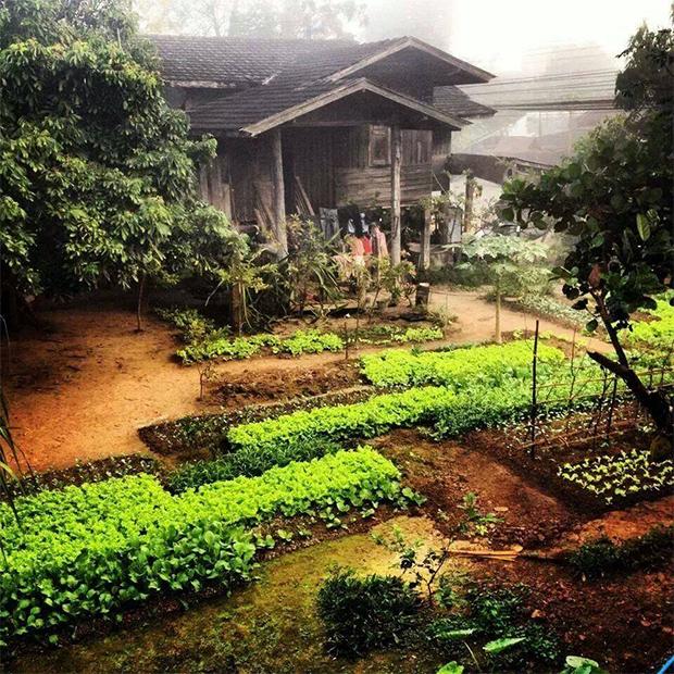 บ้านสวนผัก พอเพียง