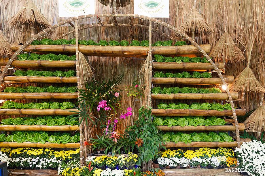 ปลูกผักออแกนิก ด้วยกระบอกไม้ไผ่