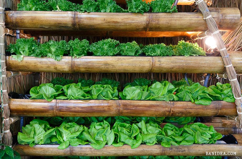 ปลูกผักในรางไม้ไผ่