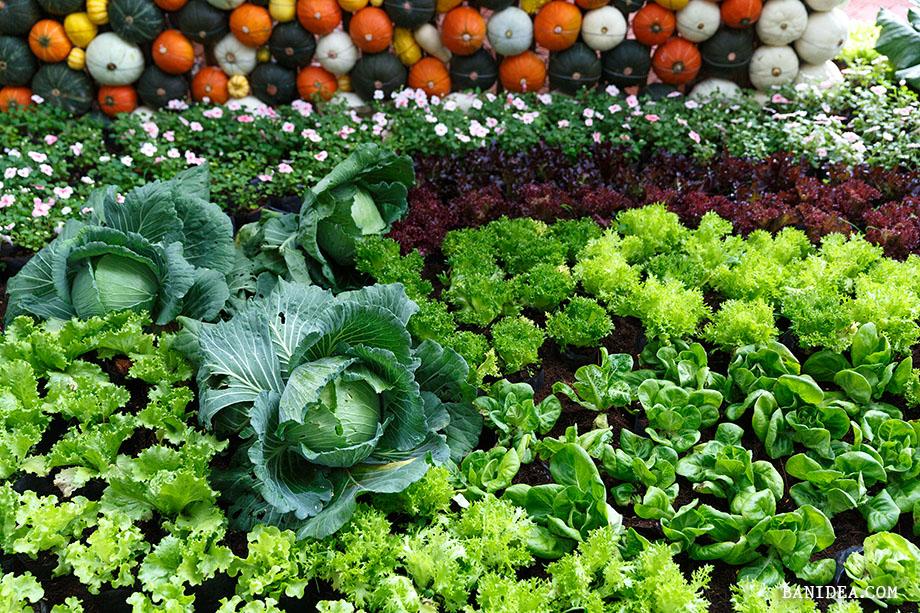จัดสวนผักสวย ๆ
