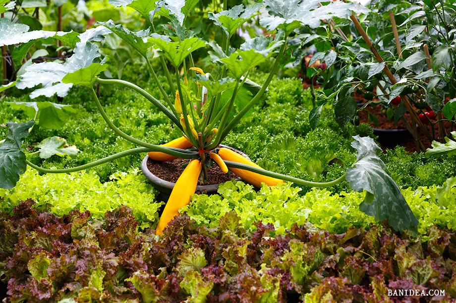 จัดสวนผักสวยงาม