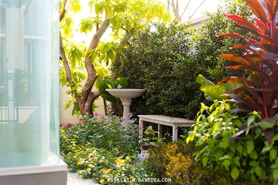 แบบสวนข้างบ้าน แถมฟรี
