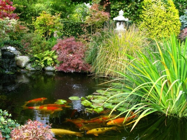 สวนน้ำจัดแบบธรรมชาติในบ้าน