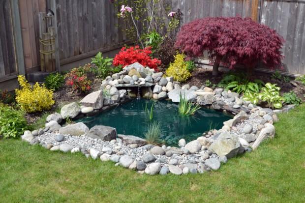 บ่อปลาเล็ก ๆ ในสวนหลังบ้าน