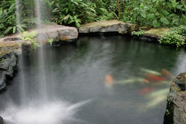 บ่อปลาขนาดเล็กในสวน
