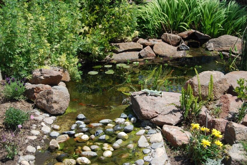 ลำธารเล็ก ๆ ในสวนหลังบ้าน