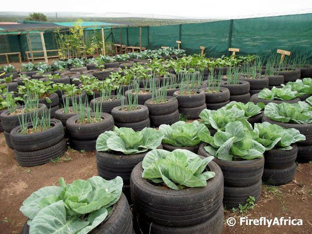 สร้างรายได้จากการปลูกผักในยางรถ