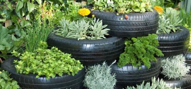 ปลูกผักและดอกไม้ในยางรถยนต์