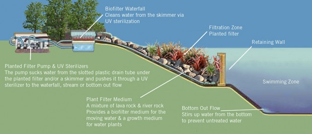 โครงสร้างสระว่ายน้ำแบบธรรมชาติ