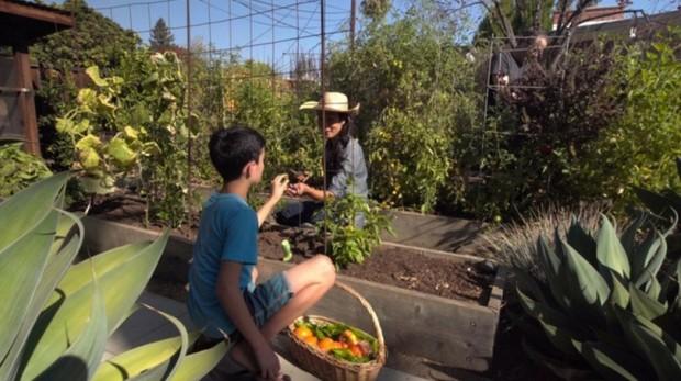แปลงผักโมเดิร์นในสวนหลังบ้าน