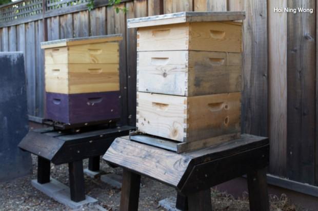 รังเลี้ยงผึ้งในบ้าน
