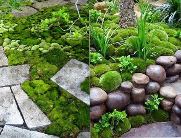 จัดสวนให้ดูชุ่มชื้นด้วยมอส