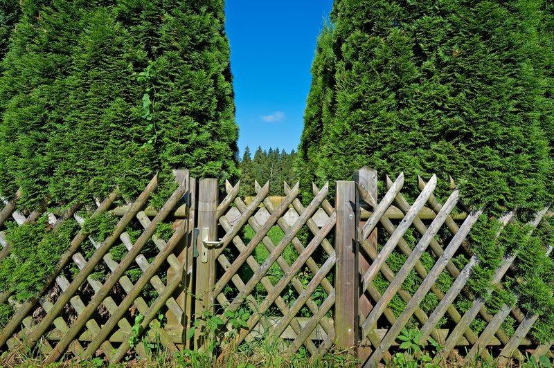 รั้วไม้ไผ่กั้นพื้นที่สวน